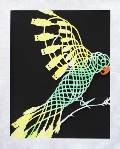 Corded Parakeet